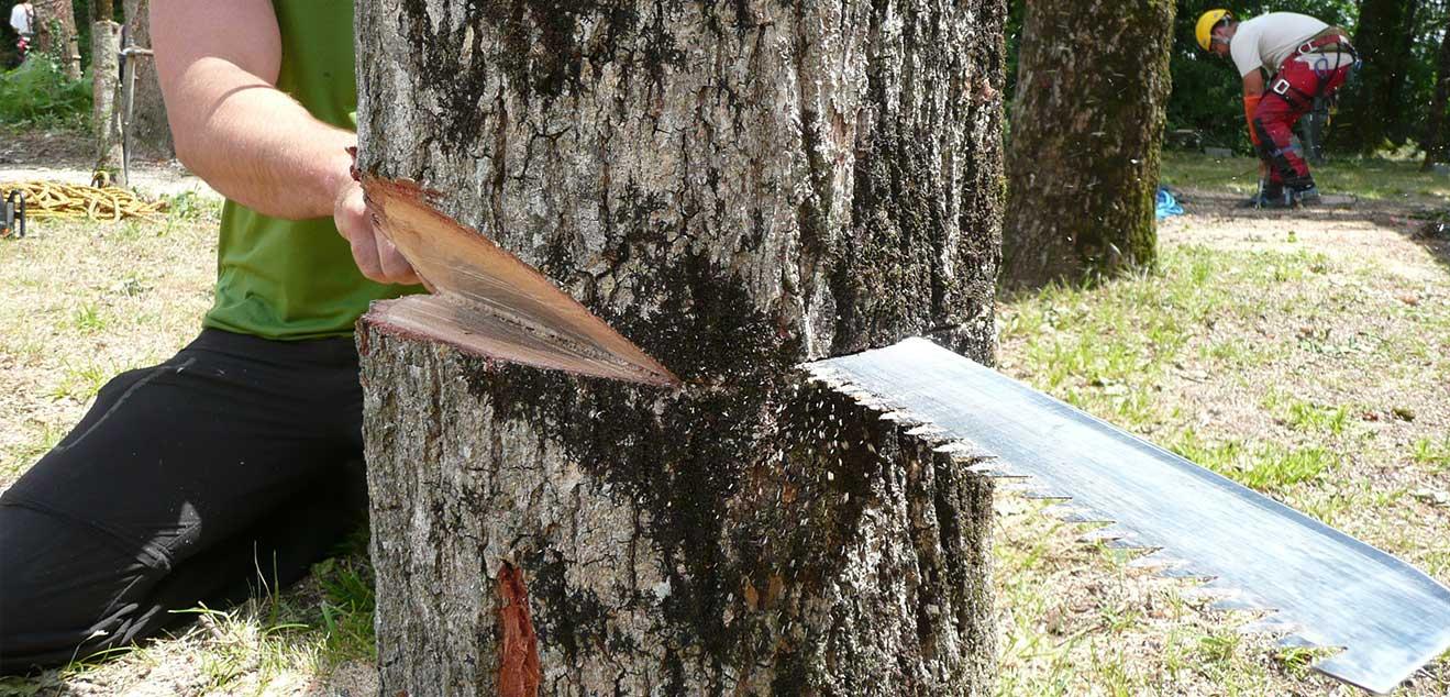 Jak ciąć drewno piłą Silky?