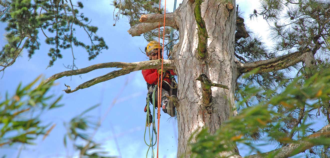 Jak wybrać odpowiednią piłę do drewna Silky?