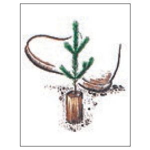 Hodowla lasu Kosztur Pottiputki