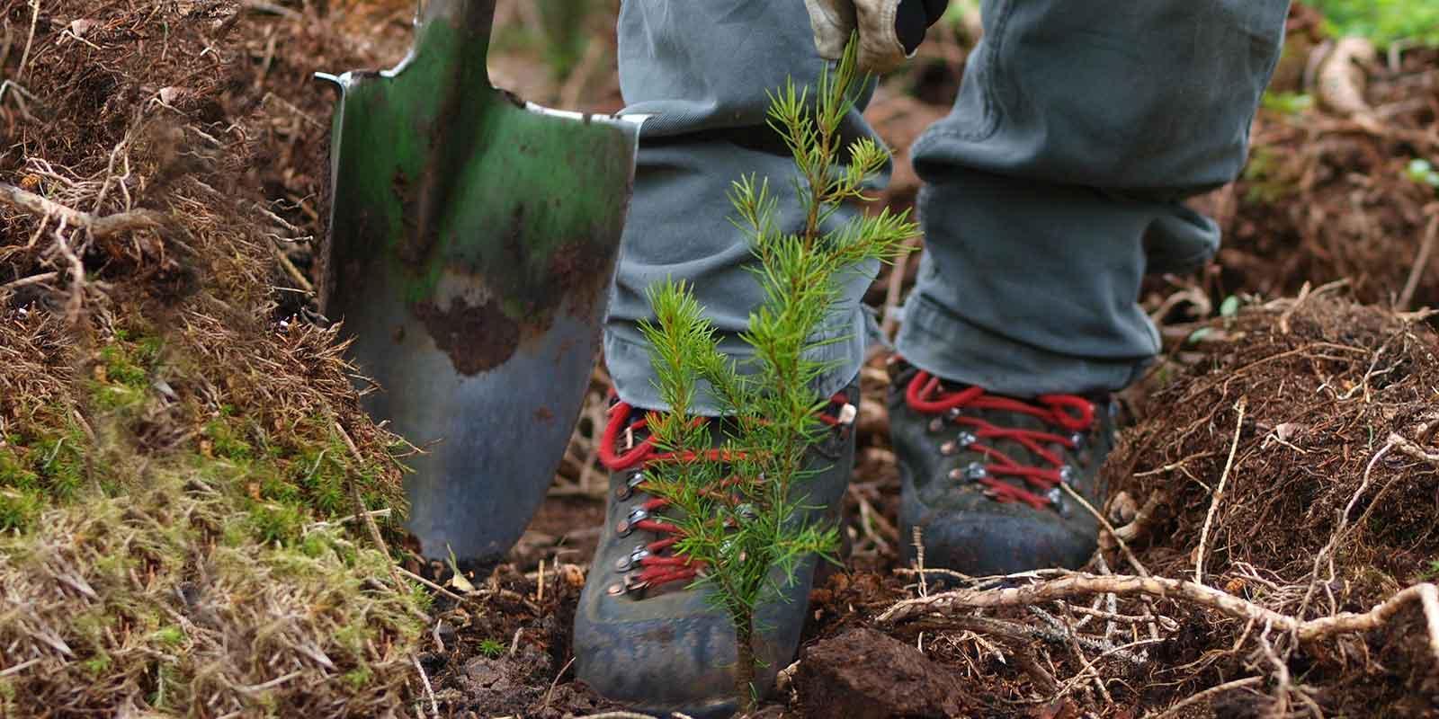 Szpadle wklęsłe & motyki. Szpadle sadzeniowe i porównanie metod sadzenia drzew